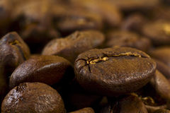 Coffee beans. Many fresh brown coffee beans close up Royalty Free Stock Photography
