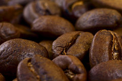 Coffee beans. Many fresh brown coffee beans close up Royalty Free Stock Images