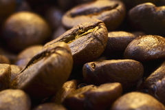 Coffee beans. Many fresh brown coffee beans close up Royalty Free Stock Image