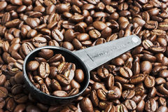 Coffee Beans in Measurement Spoon. Close up of coffee beans in measurement spoon royalty free stock photos