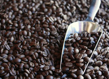 Coffee Beans with Metal Scoop Stock Photography