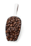 Coffee beans in metal scoop Royalty Free Stock Images
