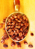 Coffee beans in metal scoop Royalty Free Stock Photo