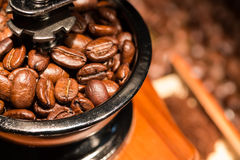 Coffee beans in a mill. Stock Images