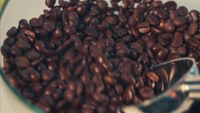 Coffee beans stock video