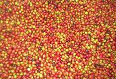 Coffee. Beans organic red Stock Photos