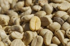 Coffee beans with parchment skin, after the pulp and outer skin Royalty Free Stock Images