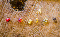 Coffee beans, peeled, dry and roasted Royalty Free Stock Image