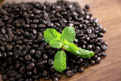 Coffee beans and peppermint green. Stock Photo