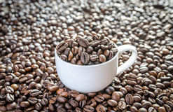 Coffee beans in porcelain cup Stock Photos