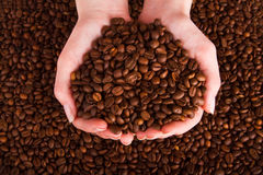 Coffee beans pouring out of cupped hands Royalty Free Stock Images