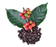Coffee beans and ripe coffee Stock Photo