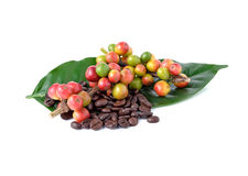 Coffee beans and ripe coffee Royalty Free Stock Image