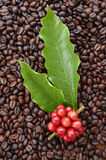Coffee beans ripening on coffee beans Royalty Free Stock Photo