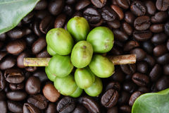 Coffee beans ripening on coffee beans Royalty Free Stock Photos