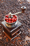 Coffee beans ripening in coffee grinder Stock Image