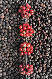 Coffee beans ripening on dried berries coffee beans backgourng Stock Photos