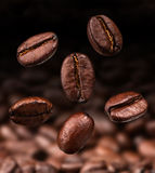 Coffee beans. Roasted arabic scented aroma brown coffe beans Stock Image