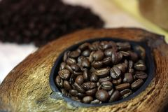 Coffee beans. Roasted coffee. Blue Hawaiian coffee in coconut. Thailand stock image