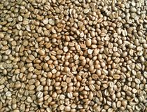 Coffee beans are roasted. Coffee beans brown and dark brown wallpaper from Chiang Mai, Thailand Stock Image