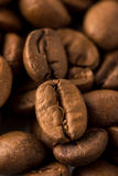 Coffee Beans. Roasted brown coffee beans on white isolated background royalty free stock images