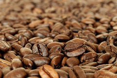 Coffee beans. Roasted coffee beans in close-up Stock Images