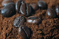 Coffee beans on roasted coffe close up Royalty Free Stock Images