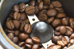 Coffee Beans. Roasted coffee beans in a coffee grinder Stock Photography