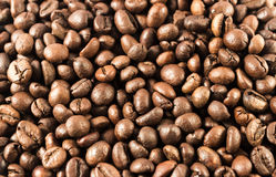 Coffee beans. Roasted coffee beans, yet scented Royalty Free Stock Photos