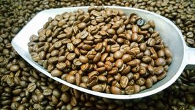 Coffee beans are roasted in scoop. Coffee beans brown and dark brown wallpaper from Chiang Mai, Thailand Royalty Free Stock Image
