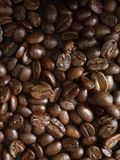 Roasted coffee beans in Thailand. The coffee beans roasting is also a good growing and trending industrial business in Thailand Royalty Free Stock Photo