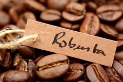 Coffee beans, Robusta Royalty Free Stock Images