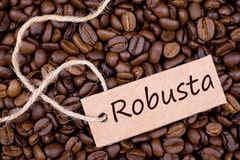 Coffee beans, Robusta Stock Photos