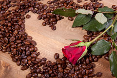 Coffee beans and rose Stock Image