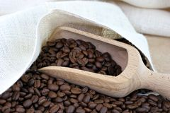 Coffee beans, a sack and a scoop. Stock Photos
