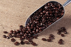 Coffee beans in a scoop Royalty Free Stock Images