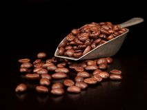 Coffee Beans in a Scoop Stock Photo