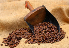 Coffee Beans and Scoop Royalty Free Stock Photos