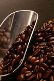 Coffee beans and scoop Royalty Free Stock Images