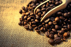 Coffee beans and a scoop. For background Stock Images