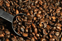 Coffee Beans with Scoop Royalty Free Stock Photo