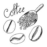 Coffee beans and scoop full of them. Contour hand drawn sketch. Vector illustration isolated on white background. royalty free illustration