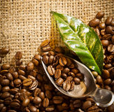 Coffee beans and a scoop on hessian. A still life of fresh roasted coffee beans with a leaf and scoop on hessian fabric with copyspace royalty free stock photography