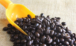 Coffee beans with scoop Royalty Free Stock Photography