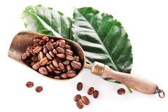 Coffee beans on scoop and leaves. Stock Image