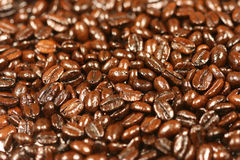 Coffee beans with selective focus Royalty Free Stock Photography