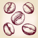 Coffee beans set hand drawn vector llustration  sketch Stock Photos