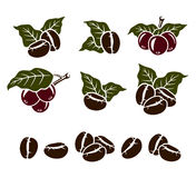 Coffee beans set. Vector Stock Photography