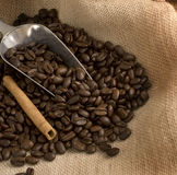 Coffee beans and silver scoop Royalty Free Stock Photography