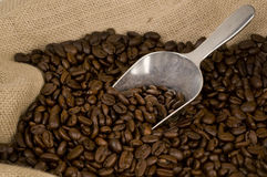 Coffee beans and silver scoop Stock Photography